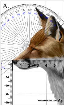 Red Fox Face Variation Calculations - A
