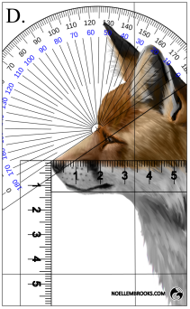 Red Fox Face Variation Calculations - D