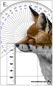 Red Fox Face Variation Calculations - E