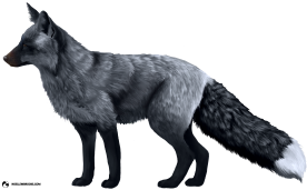 Valo the Silver-Colored Ranched Red Fox