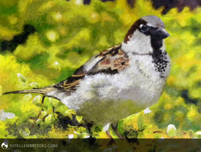 Colored Sparrow