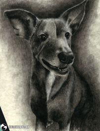 draw drawing drawings image images picture pictures art arts artsy artwork artworks artist artistic project projects series create creates creative soft shading portrait portraits portraiture profile profile black and white achromatic monochromatic monochrome animal animals kingdom animalia wildlife nature realism realistic detail details detailed charcoal pencil pencils gradient gradients tinted color colors colored dog dogs cat cats pet pets
