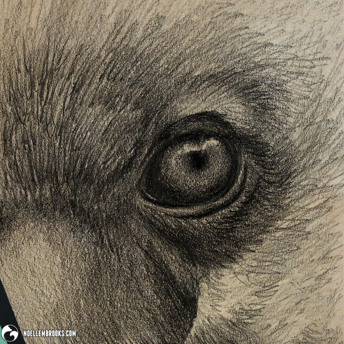 art arts artsy artwork artworks artist artistic image images picture pictures project projects series create creates creative noelle noellembrooks noellebrooks brooks portrait portraits portraiture profile profile realism realistic detail details detailed soft shading shades gradient gradients black and white achromatic monochromatic monochrome draw drawing drawings drawn graphite pencil pencils sketch sketches faunafocus aardwolf aardwolves hyena hyenas